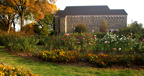McCabe Library building as seen from the Swarthmore rose garden