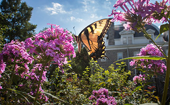 A butterfly on Swarthmore's campus