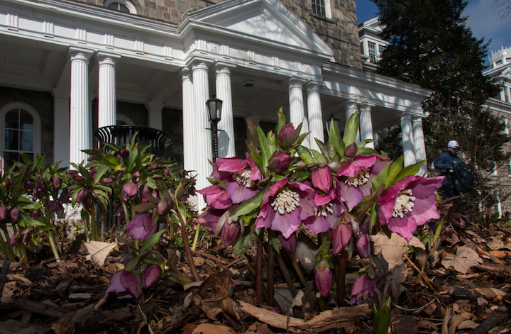Spring flowers in front of Parrish Hall
