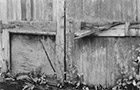 This is a film photograph of a barn door with several types of wild plants in front of it
