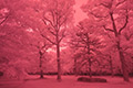 Infrared photograph of the mixed forest