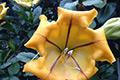 A flowering shrub