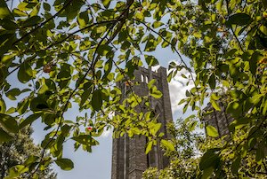 clothier bell tower under tree