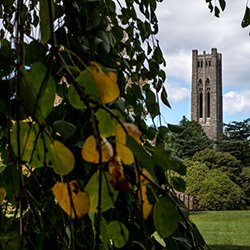 Clothier Bell Tower behind trees