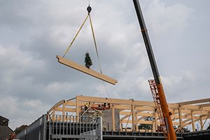 Potted plant on wooden beam placed on structure by a crane
