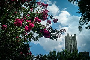 Clothier bell tower against blue sky with clouds. Red flowers in foreground.