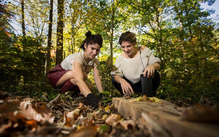 Two students plant trees in Crum Woods