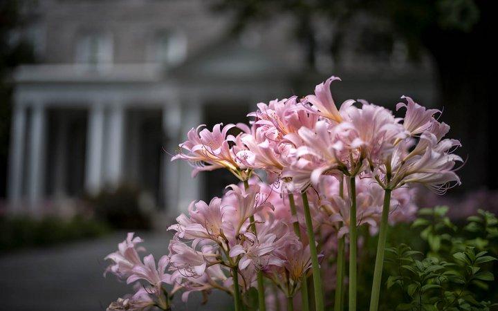 flowers on magill walk