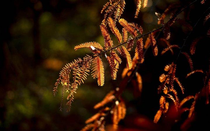 sunlight of the leaves