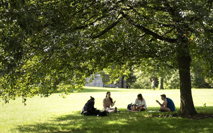 students talking under a tree