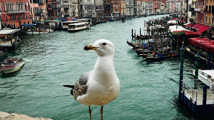 pigeon in front of waterway in Venice