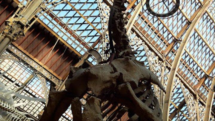 fossils inside a museum