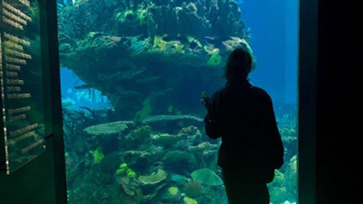 student in aquarium