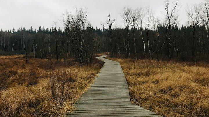 path in rural landscape