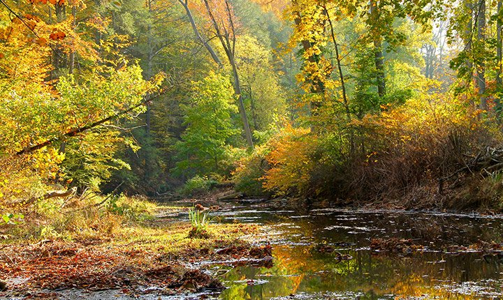 crum woods in the fall