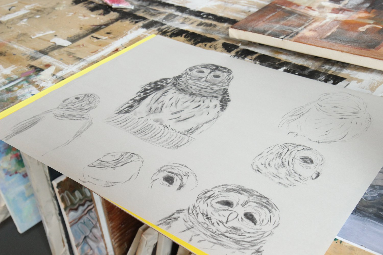Owl Studies. Academy of Natural Sciences visits our studios for live bird studies in the Foundation Drawing class.