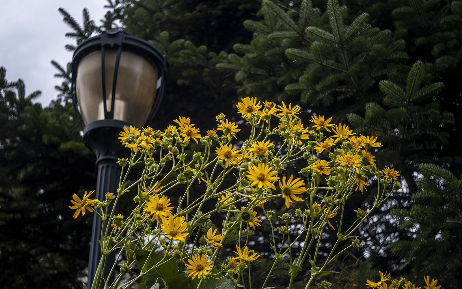 flowers and lamppost