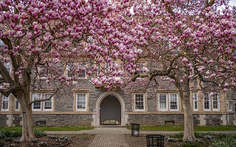 Wharton in Spring time