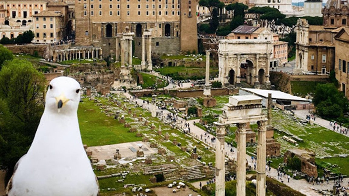 view of ruines in Rome
