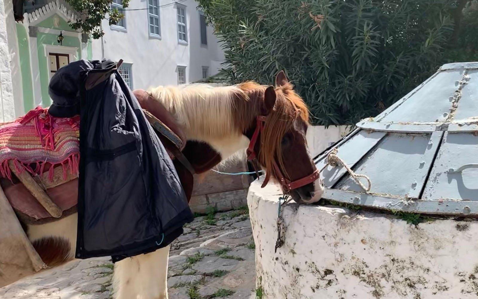 horse in Greece