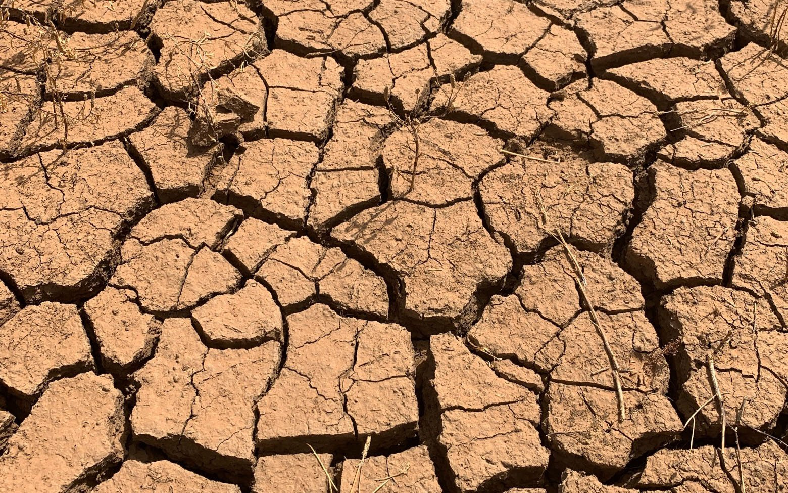 view of dry, cracked ground