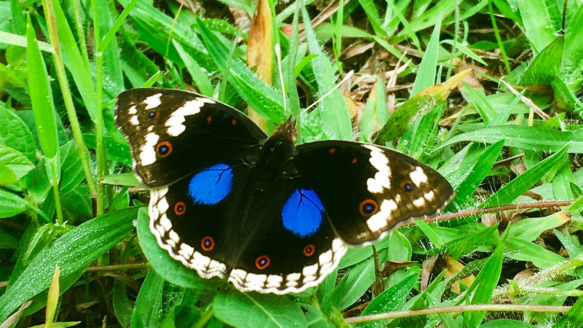 close up of a butterfly