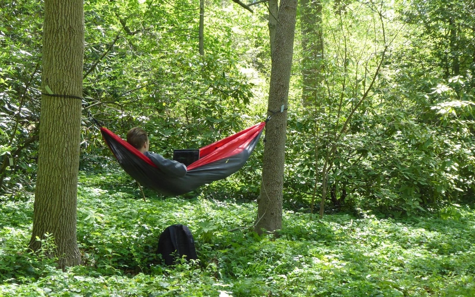 A red hammock strung between two tall trees in the woods