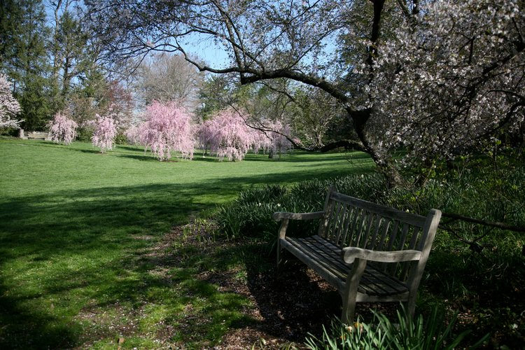 campus bench in front of blossoming trees