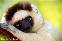 Can Lemurs Save Madagascar? Conservation Attitudes and Policies