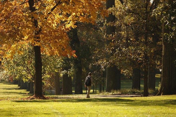 Autumn foliage across Magill Walk