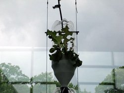 hydroponic window farm
