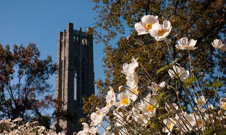 Clothier Tower behind flowers