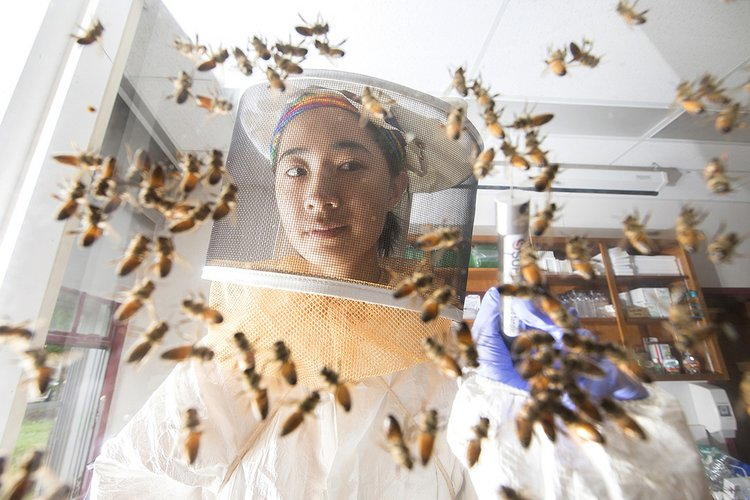 Student examines bees while wearing a beekeeping suit
