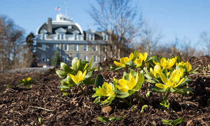 Flowers sprouting on Swarthmore's campus