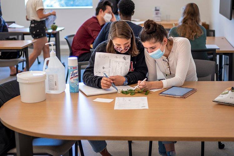 Students examine plant life in classroom