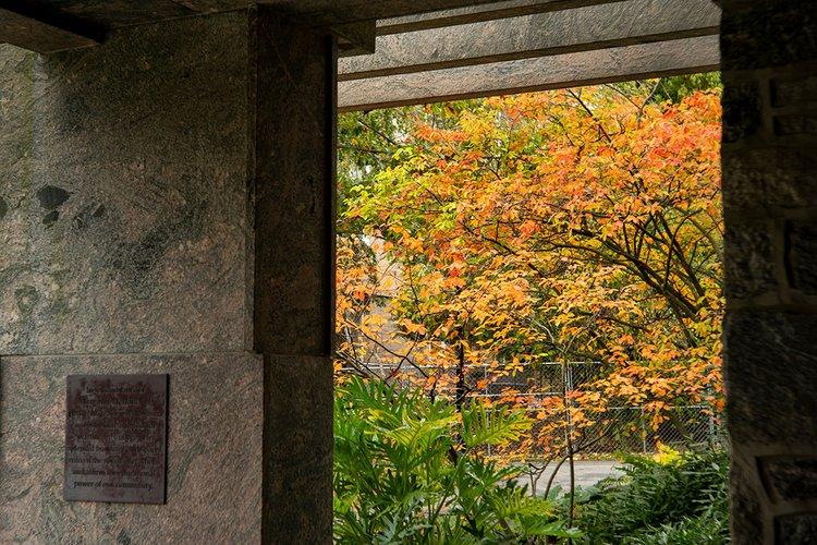 Leaves near Kohlberg Hall