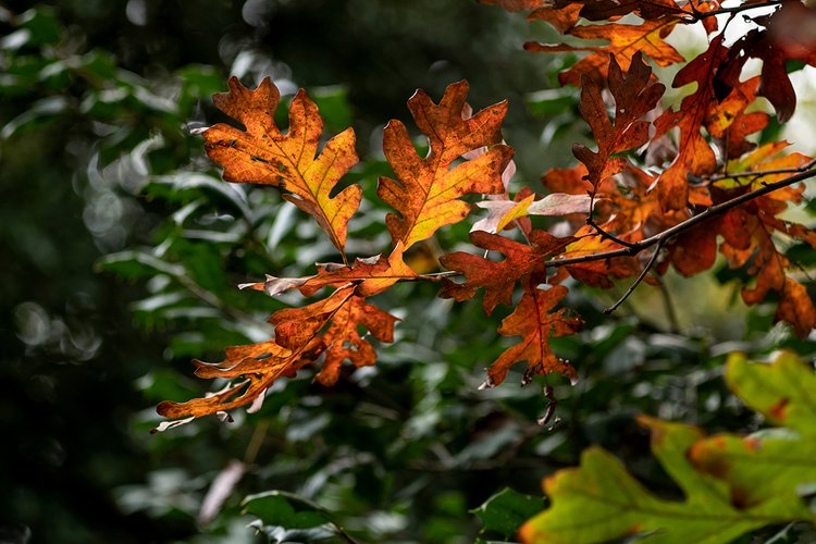 Red/orange leaves among green ones
