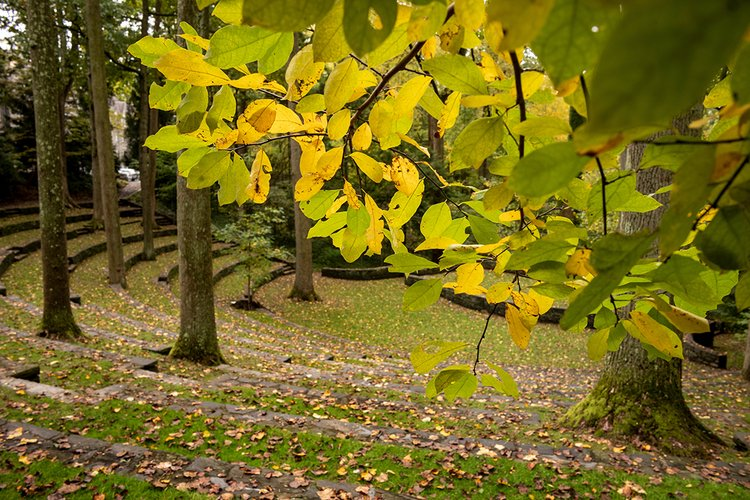 Leaves in amphitheater during fall