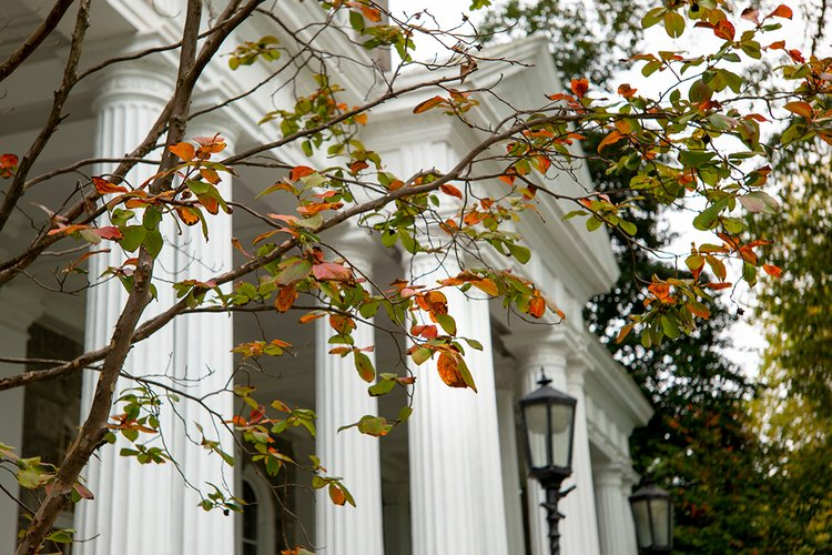 Leaves near Parrish Hall