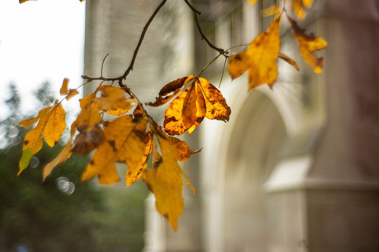 Leaves in front of clothier bell tower