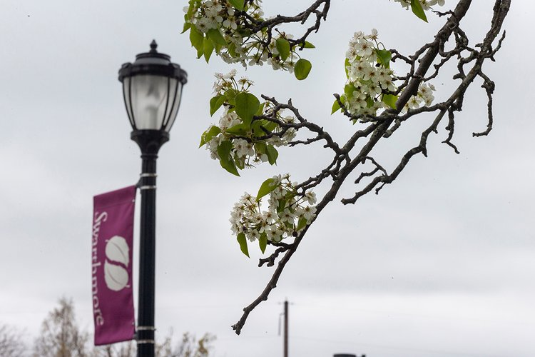 """White flowers in branch in foreground; lamp post with garnet flag reading """"Swarthmore"""" in background"""