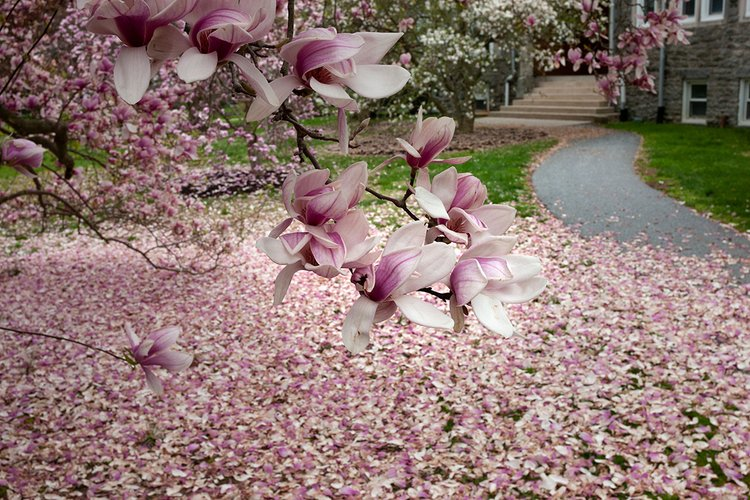 Pink and white flower petals cover the ground outside of stone building