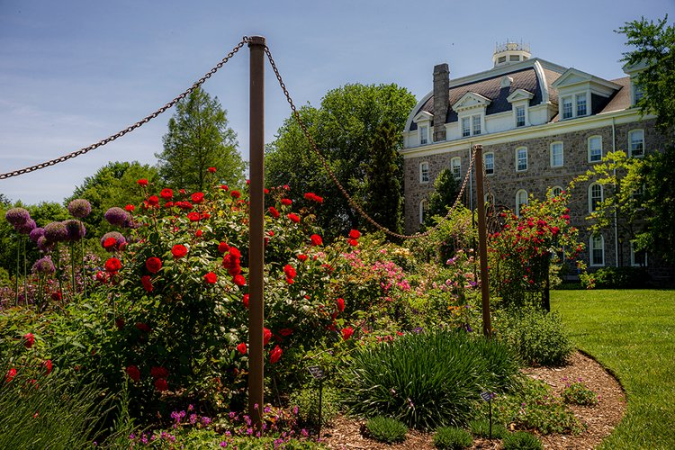 Rose garden with Parrish Hall in Background. Red and purple flowers in bloom.