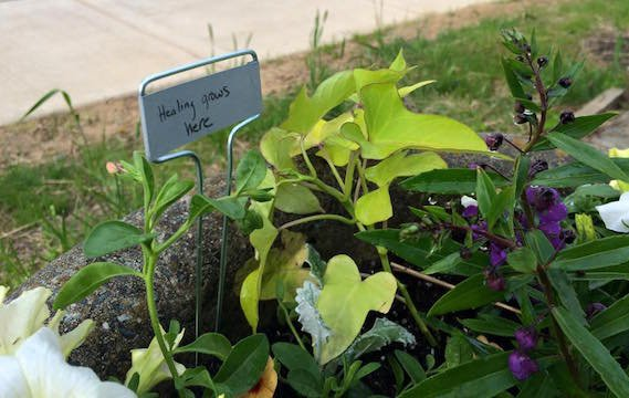 """Healing Grows Here"" sign in Title IX garden"