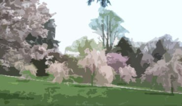 Lanscape painting of slopping hill and blooming trees