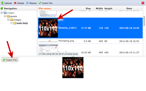 An existing image is highlighted in blue.  Choose Insert File to add it to content