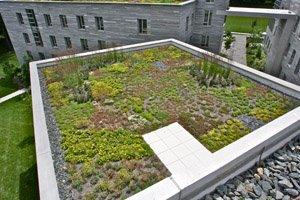 David Kemp Hall green roof