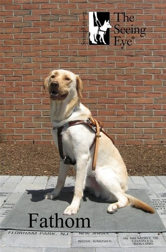 Fathom, service dog from The Seeing Eye