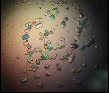 Heavy atom and halide crystal derivative
