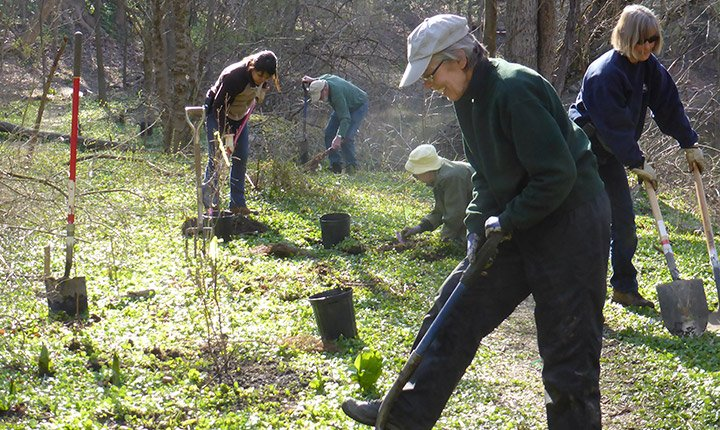 crum woods tree planting day